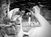 Thumbnail image for Dogs at Weddings: Wedding Feels Friday
